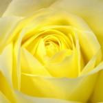 flowers-20348_1920-400x270-MM-100
