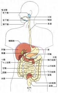 alt=''ヤクケンバイオリンクと腸内フローラ''